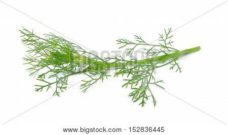 fresh coriander bunch isolated on white background