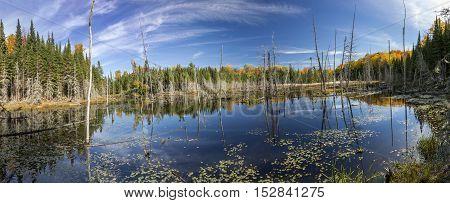 Beaver Pond In Autumn - Ontario, Canada