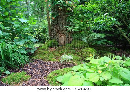 Little fairy tale door in a tree trunk.