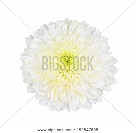 whtie flolwer isolated on the white background