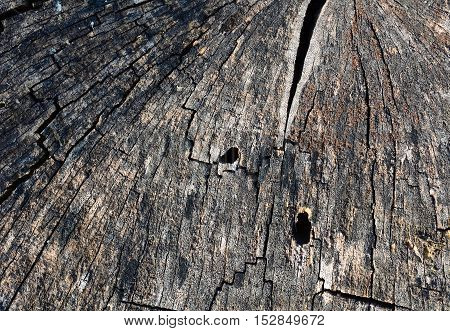 Dry tree stump with cracks texture or background