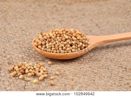 coriander seed in wooden spoon on hemp sack background