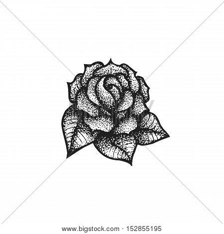 Vector Hand Drawn Rose Illustration.