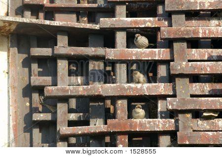 Sparrows Between Metallic Structure