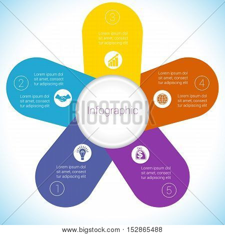 Flower Camomile infographic template colourful petals five positions.