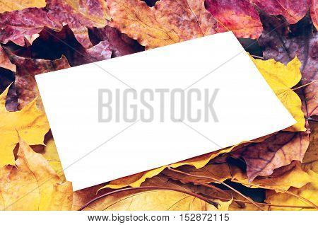 Background with note paper and maple leaves