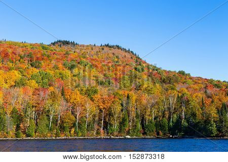 Autumn leaves. Leaves dying and in the death giving of a final flare with striking colors or red, scarlet, yellow and gold. The rot has started but cannot deprive the leaves final statement.