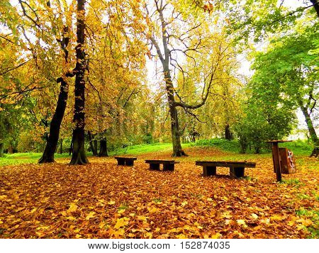 Colorful leaves on deciduous trees and bench in park during autumn