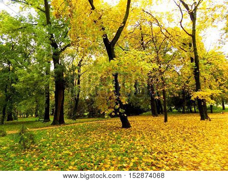 Colorful leaves on deciduous trees in park during autumn