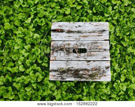 An old wooden bench with peeling grey paint is surrounded by green weeds.
