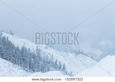 Beautiful taiga hills on Far East of Russia in early october. Taiga in winter. Beautiful nature. Snowy weather.