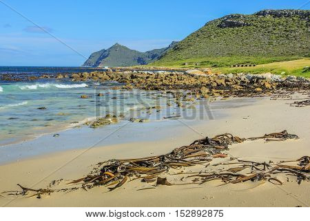 Remote and spectacular beach on the eastern side of the Cape Peninsula overlooking False Bay, Western Cape, South Africa. The Cape of Good Hope, offers wild beaches without lifeguards service.
