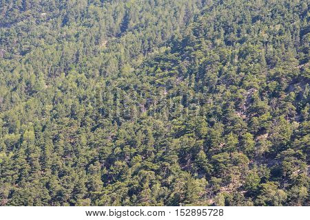 Forest Seamless Pattern Texture Background