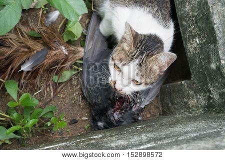 Cat Hunted A Bird