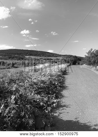 Country road in vine yard in monochrome