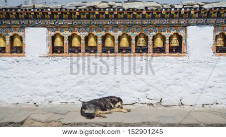 Religious prayer wheels and dog in Bhutan