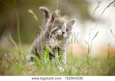 Little kitten in the grass. Selective focus
