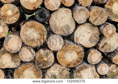 Background of the drying logs for firewood