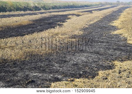 Burning Track In Paddy Field