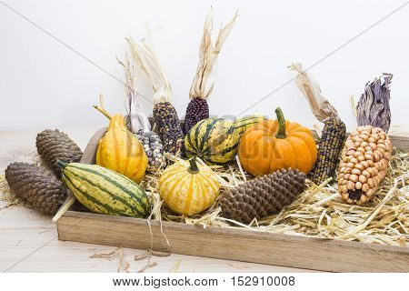 Autumn mood with decorative pumpkins, corns, pine cones and straw