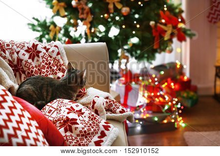 Cat lying on sofa in living room decorated for Christmas