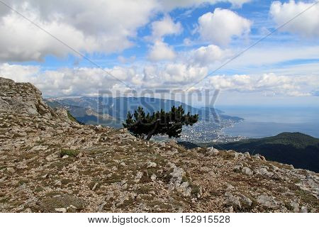 Lonely tree growing on top of the rock against the blue sky with clouds. Mount Ai-Petri. Crimea Russia.