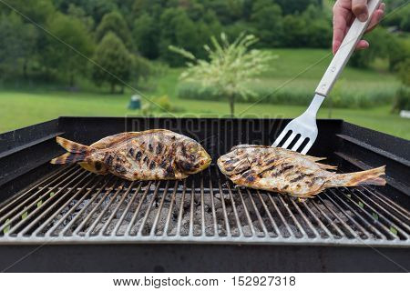 Dorada Fish Barbecued On The Grill Outdoor. Spanish Cuisine