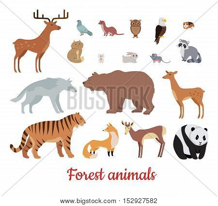 Forest animals set. Deer, bear, wolf, tiger, fox, panda, raccoon, rabbit, owl mouse eagle weasel roe deer chipmunk isolated on white background Wildlife character