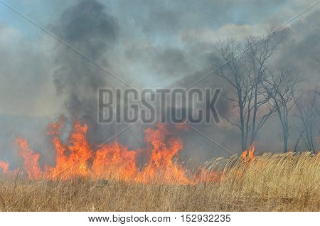 A landscape on brushfire: flame smoke ash trees and sky.