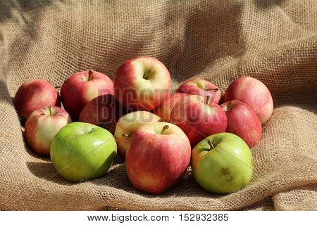 Fresh fruit / Ripe red and green apples