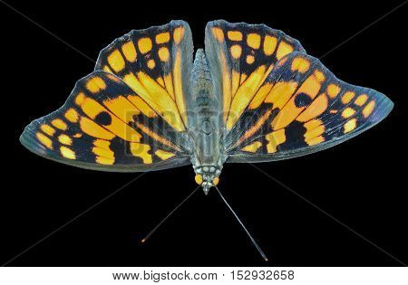 A close up of the butterfly (Sephisa dichroa princeps). Isolated on black.