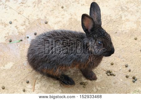 One black rabbit sit on the ground in the garden