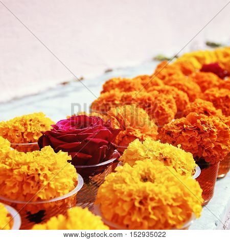 Marigold and rose for offering respect at Mahabodhi Temple. Aged photo. Colorful flowers on the white shelf. Bodhgaya India.