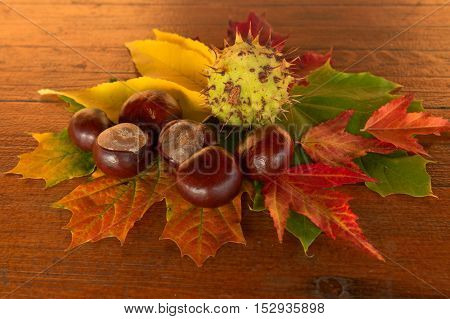 Basket with autumn colored maple leaves,original background