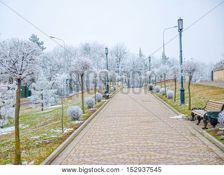 View Of Rime-covered Alley With Trees, Benches, Lights On Winter Day In Resort Area, Pyatigorsk