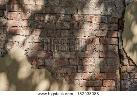 A fragment of an old brick wall with remnants of plaster and shadows from trees. Texture background