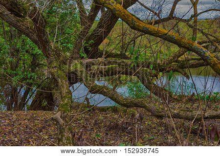 Warm autumn landscape lake,pond ,swamps,interesting spreading tree