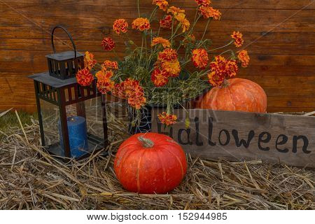 Mystical autumn Halloween, original background with pumpkin