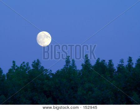Brillante luna llena sobre árboles al atardecer