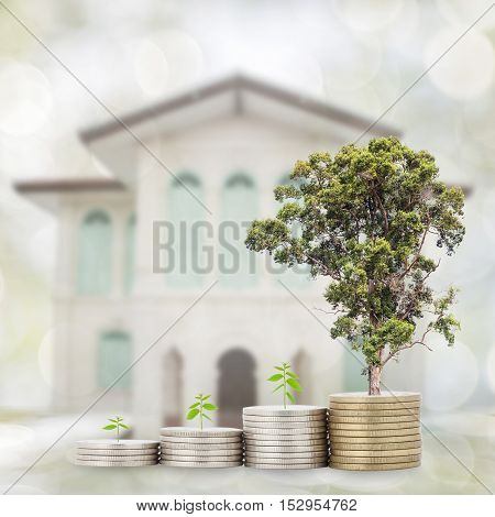 Trees growing on coin Business Finance and Growth concept