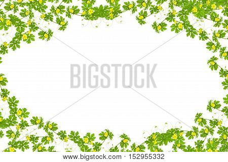 Green leaves with yellow flower frame isolated on white background