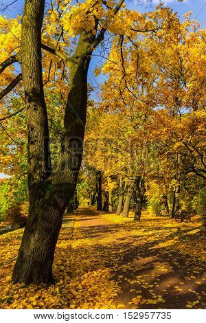 Pathway through the autumn forest. Colorful autumn park.