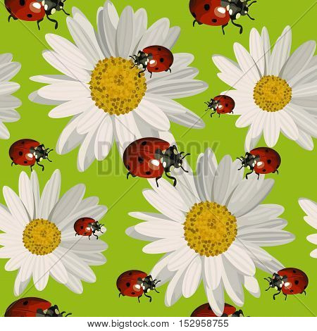 Seamless pattern with white daisies and ladybugs on green background. Vector illustration.