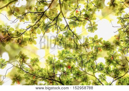 Blur green leaves on abstract bokeh natrue background