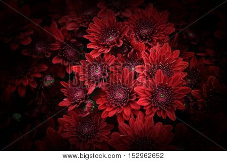 red flower background.