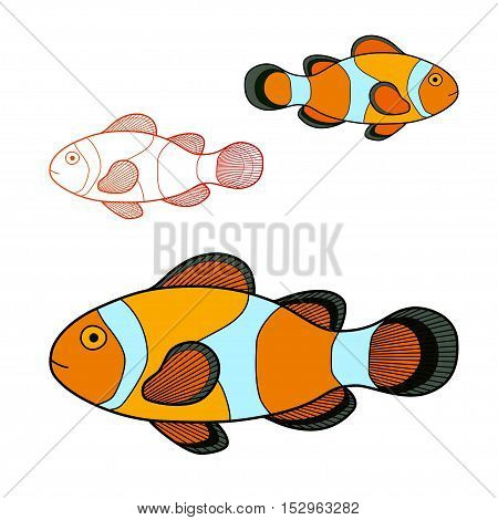 Vector illustration of clown fish isolated on white background.