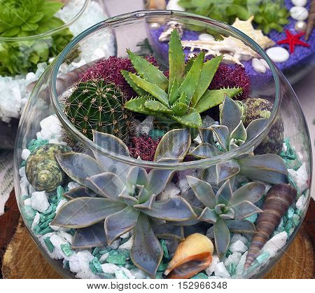 Decorative glass vase with succulent and cactus plants. Glass interior terrarium with succulents and cactuses.Miniature garden in glass with cactuses and succulents.