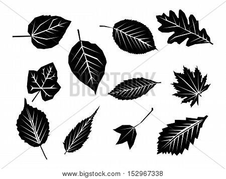 Leaves vector set isolated from the background. Collection black silhouettes of leaves. Leaves icon different shapes. Simple leaves tree.