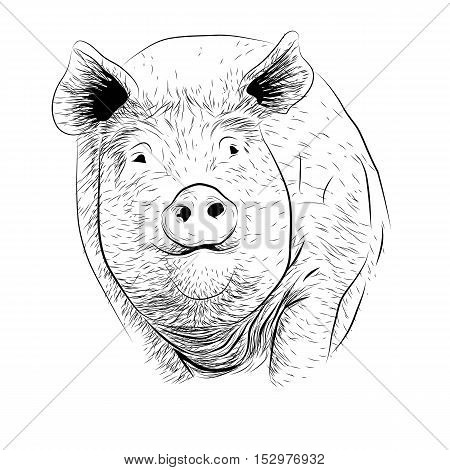 Pig swine hog sow piggy piglet piggie pigling brawn boar grown big cute eco farm animal snout. Vector square beautiful closeup front frontal view black outline illustration isolated white background