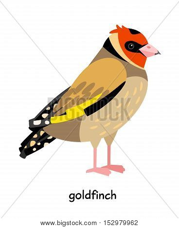 Ruffled colored Goldfinch with pink legs vector illustration